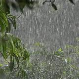 A máquina de chuva da Amazônia